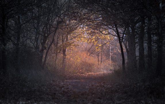 A forest path in Autumn